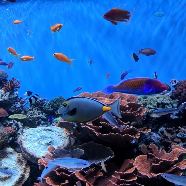 האקווריום בסן דייגו