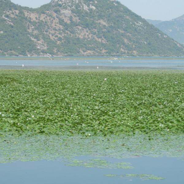 אגם סקאדר