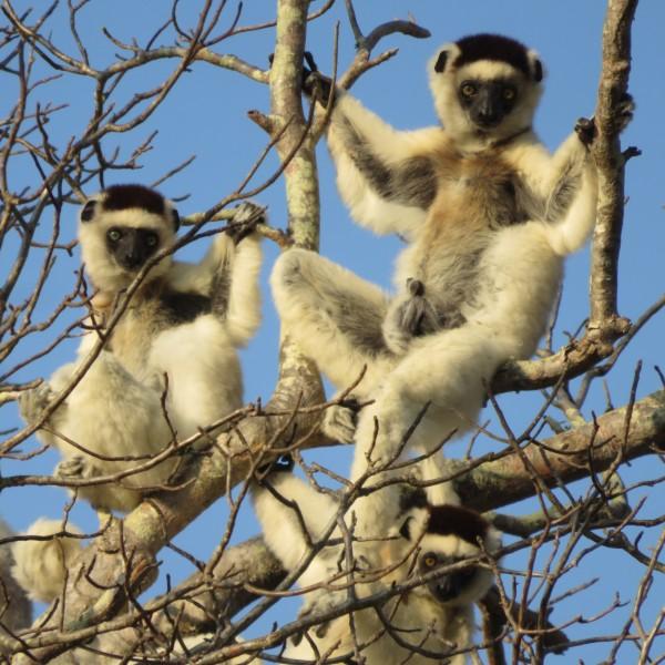 לימור סיפקה במדגסקר