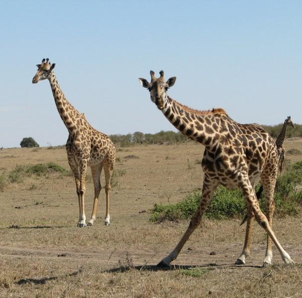 מסאי מרה קניה