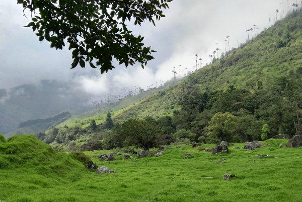 סולנטו-קולומביה