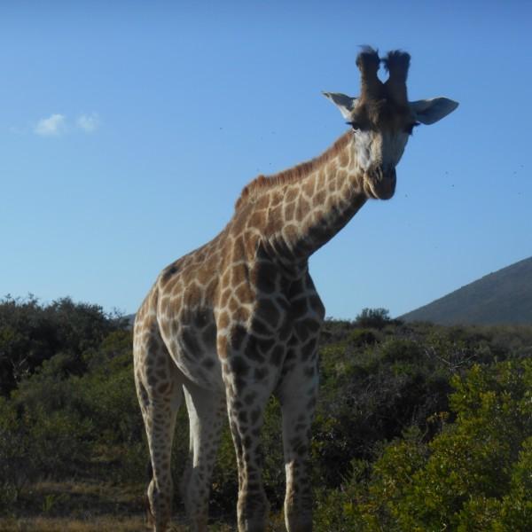 ספארי בדרום אפריקה
